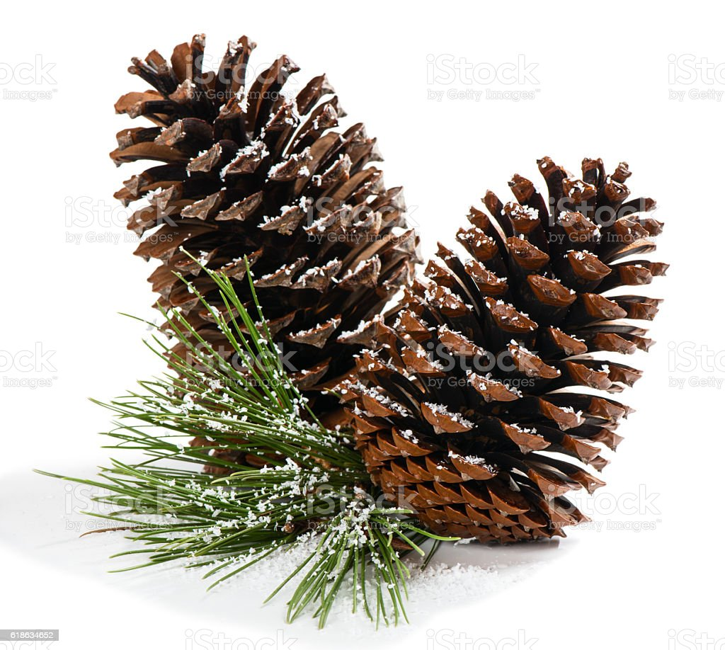 Christmas pine branch with cones stock photo
