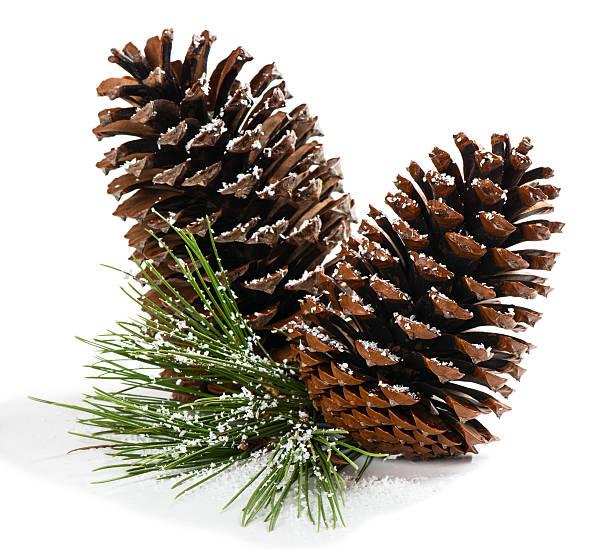 Derivación con conos de pino de Navidad - foto de stock