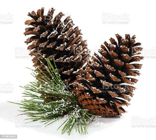 Photo of Christmas pine branch with cones