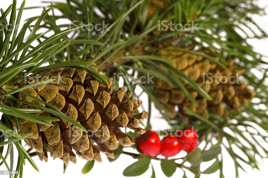 christmas pine bunch with cones and berries royalty-free stock photo