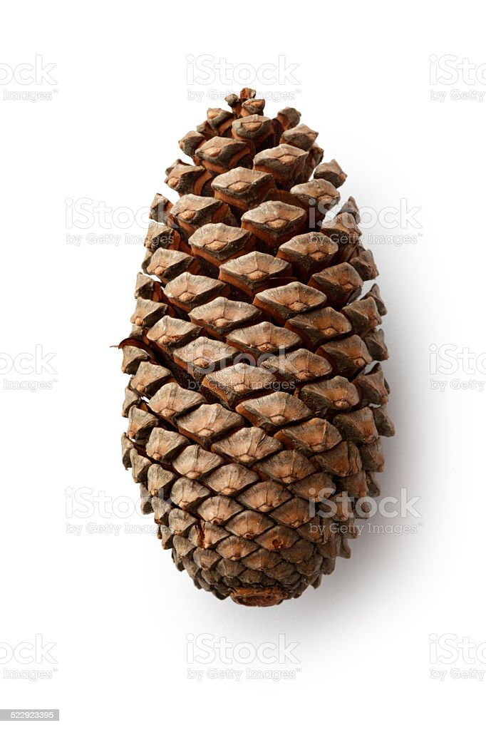 Christmas: Pine Cone stock photo