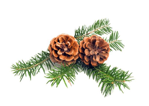 Conos de pino de Navidad - foto de stock