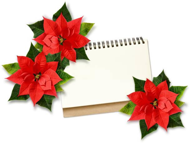 weihnachten weihnachtsstern blumen und hinweis - weihnachtssterne aus papier stock-fotos und bilder