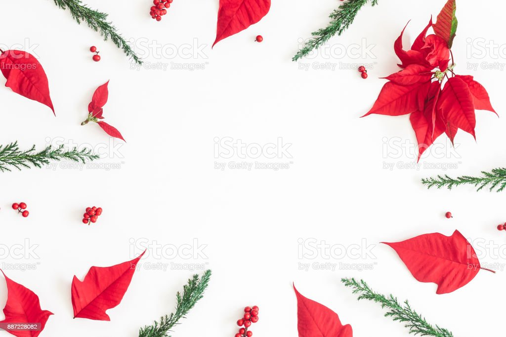 Christmas composition. Frame made of christmas poinsettia on white...