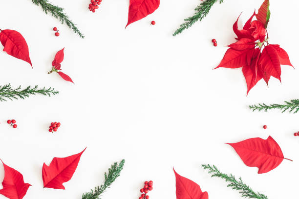 weihnachten weihnachtsstern auf weißem hintergrund. ansicht von oben flach legen, exemplar - weihnachtssterne aus papier stock-fotos und bilder