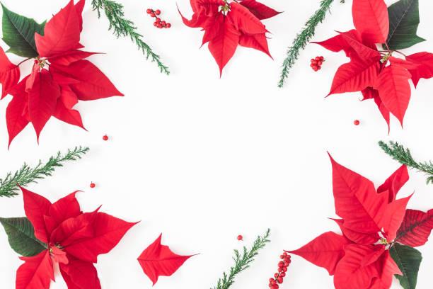 weihnachten weihnachtsstern auf weißem hintergrund. ansicht von oben flach legen - weihnachtssterne aus papier stock-fotos und bilder