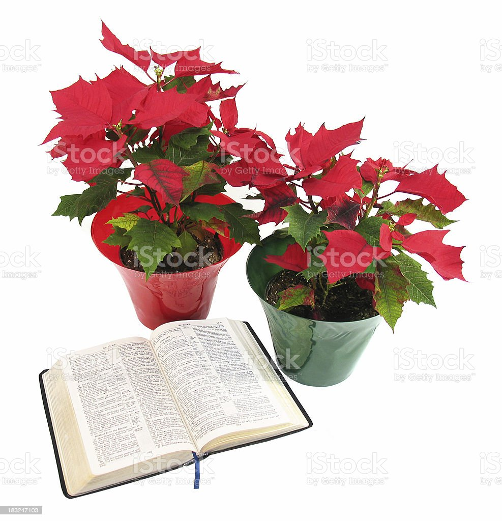 Christmas Poinsettias and Bible (KJV) royalty-free stock photo