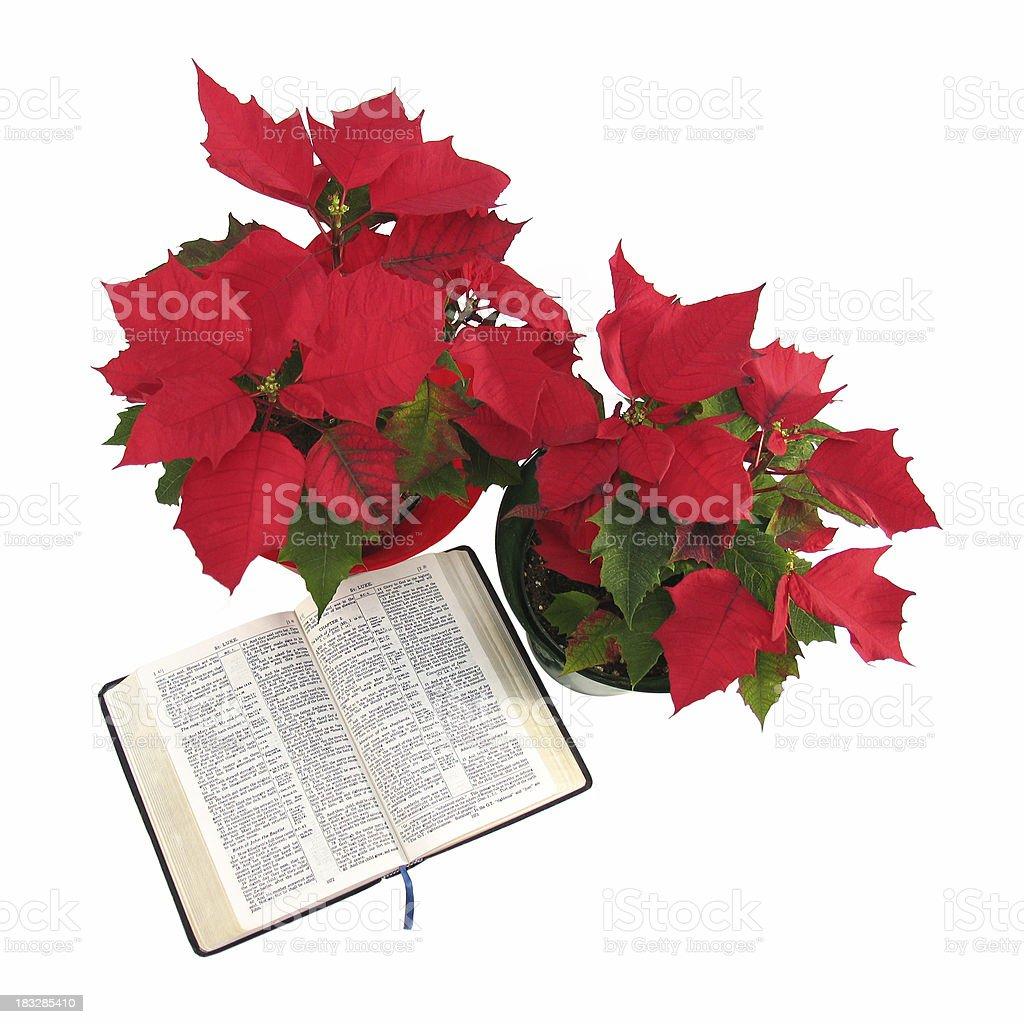 Christmas Poinsettias and Bible (KJV) royalty-free stock photo