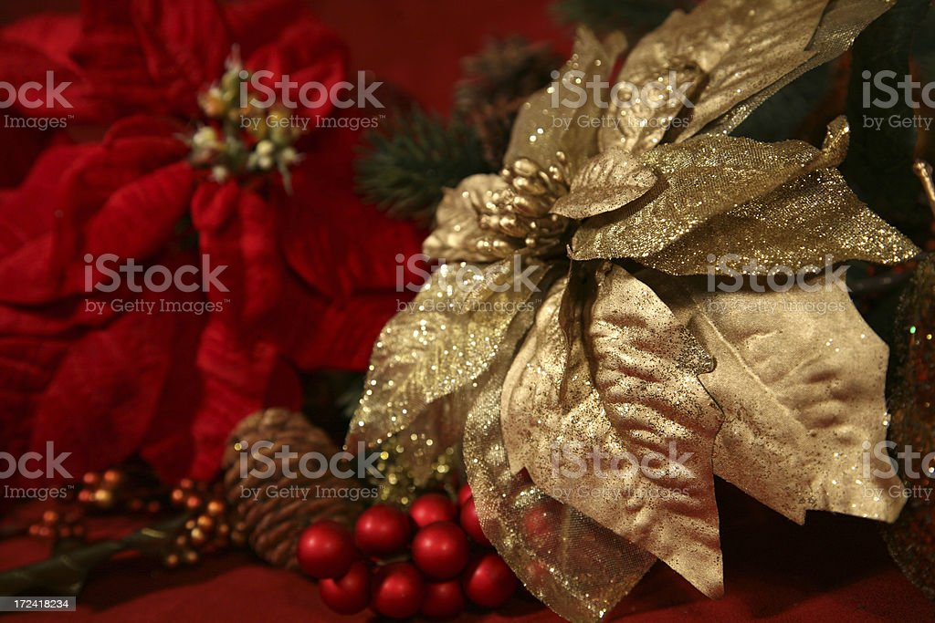 Christmas Poinsettias royalty-free stock photo
