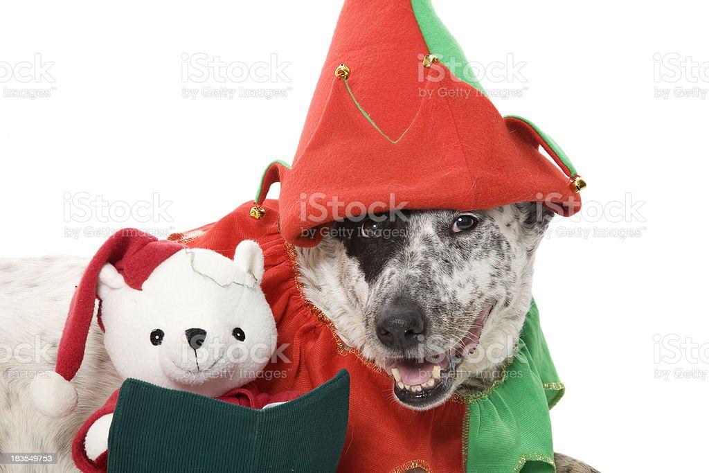Christmas Pooch – zdjęcie