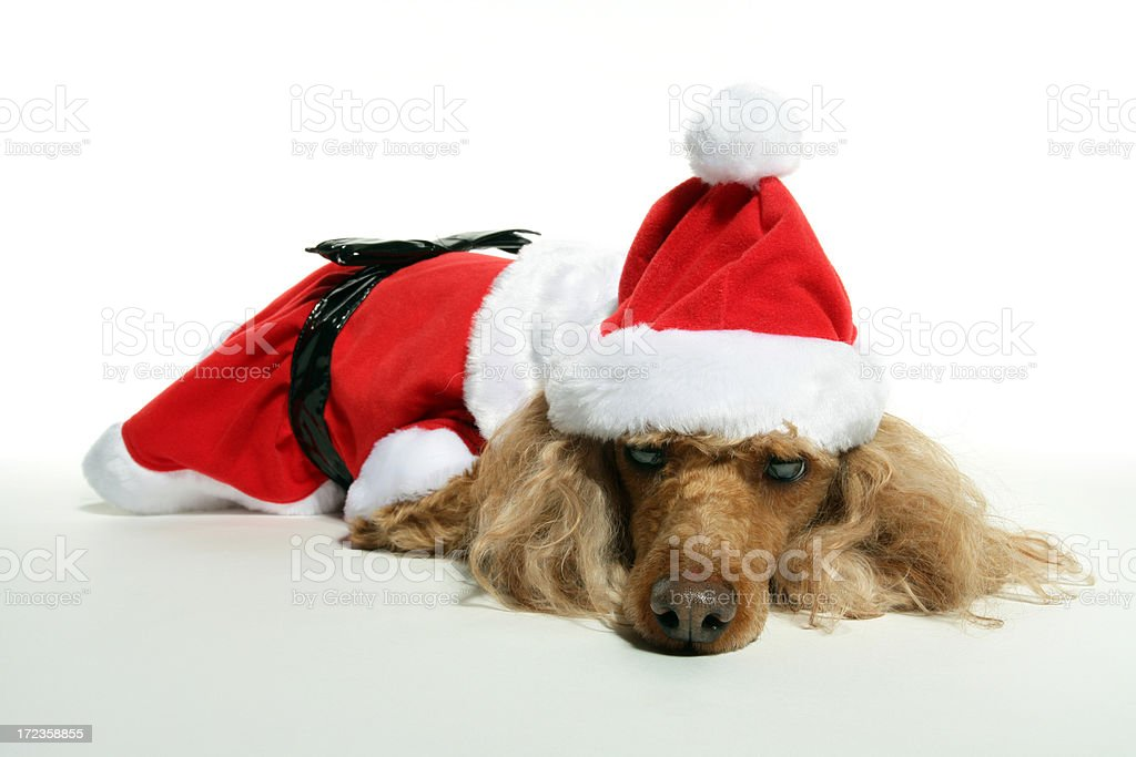 Christmas - Poodle Santa Claus royalty-free stock photo