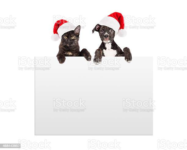 Christmas puppy and kitten hanging over sign picture id468443852?b=1&k=6&m=468443852&s=612x612&h=dg8jl63hr7vm5sxzkfzxphpzlepego0brgpvo1kz6t4=