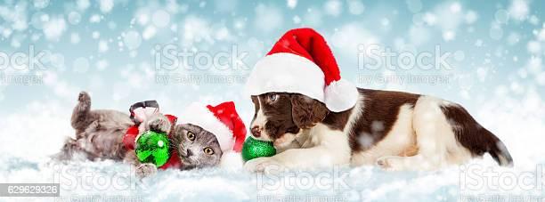 Christmas puppy and kitten in snow picture id629629326?b=1&k=6&m=629629326&s=612x612&h=ywf0wbcmcvflr2 2k9k0vvobb o2gm8vnrjfofs3aj0=