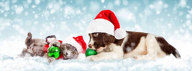 christmas puppy and kitten in snow - katze weihnachten stock-fotos und bilder