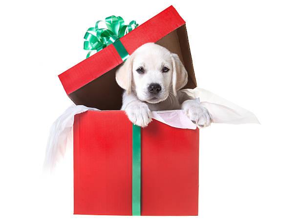 Welpen in einem Weihnachts-Geschenk-box – Foto