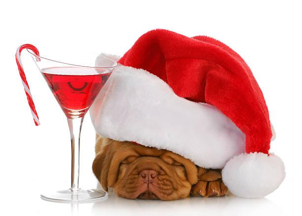 weihnachten welpe - weihnachten de stock-fotos und bilder