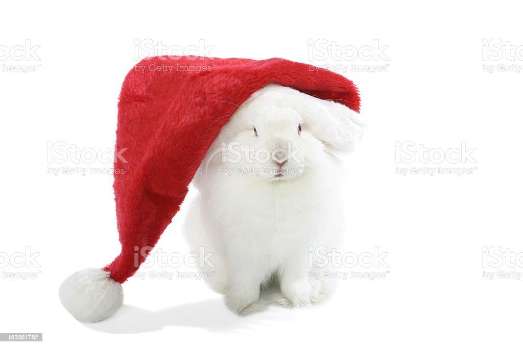 Christmas rabbit! royalty-free stock photo