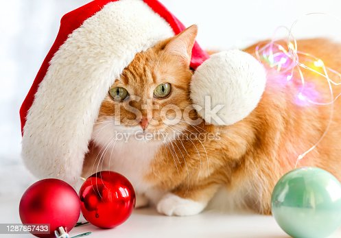 A red cat sits in a red Santa hat on a white background with Christmas toys red balloons and bokeh lights.Merry Christmas! Happy New Year!Christmas cat, holiday.Selective focus.A pet muzzle.