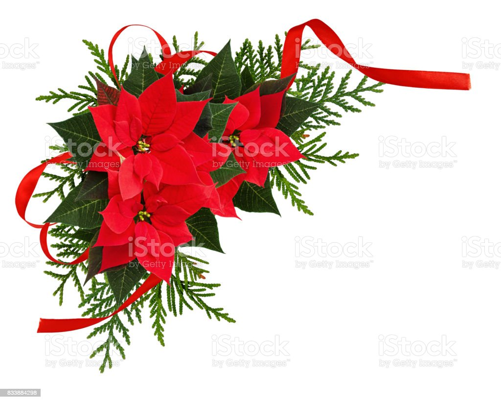 Christmas red poinsettia flowers corner arrangement with ribbon bow stock photo