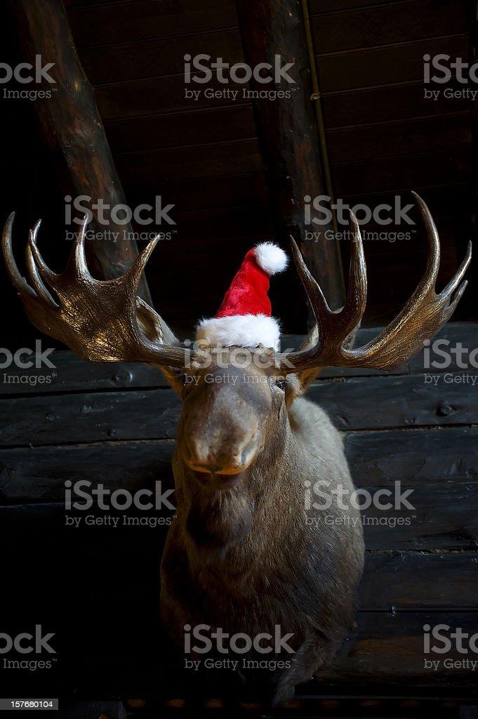 Christmas Reindeer with santa hat stock photo