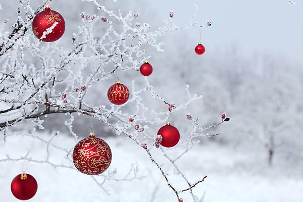 Christmas rosehip picture id184314771?b=1&k=6&m=184314771&s=612x612&w=0&h=u0mndooxsutnpnk2hioppycp5etme0q4lm4ryqej8mg=