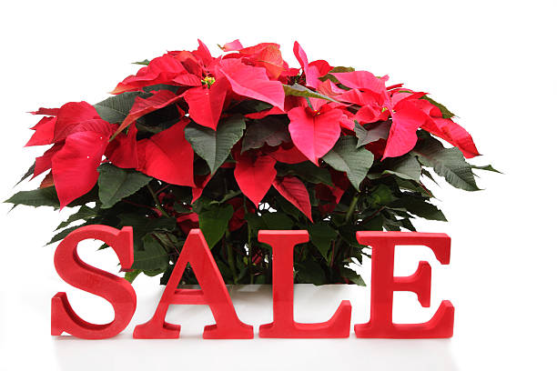 Christmas Sale Winter Promotion stock photo
