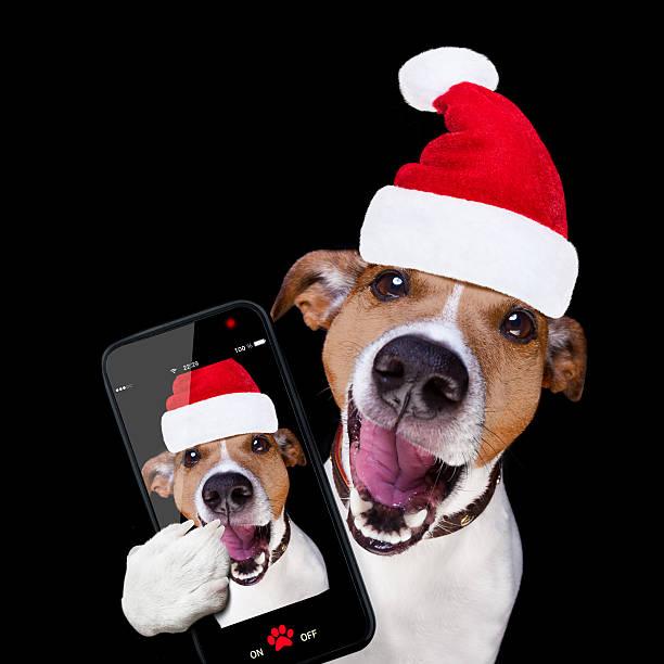 christmas santa claus dog isolated on black selfie - sprüche kalender stock-fotos und bilder