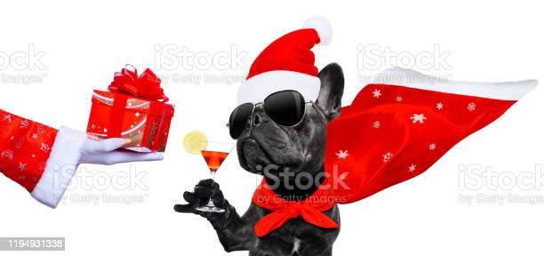 Christmas santa claus dog picture id1194931338?b=1&k=6&m=1194931338&s=612x612&h=slh iaqmzqxphxdz9ta vvxowjpxakpglmz8n2zzh7a=