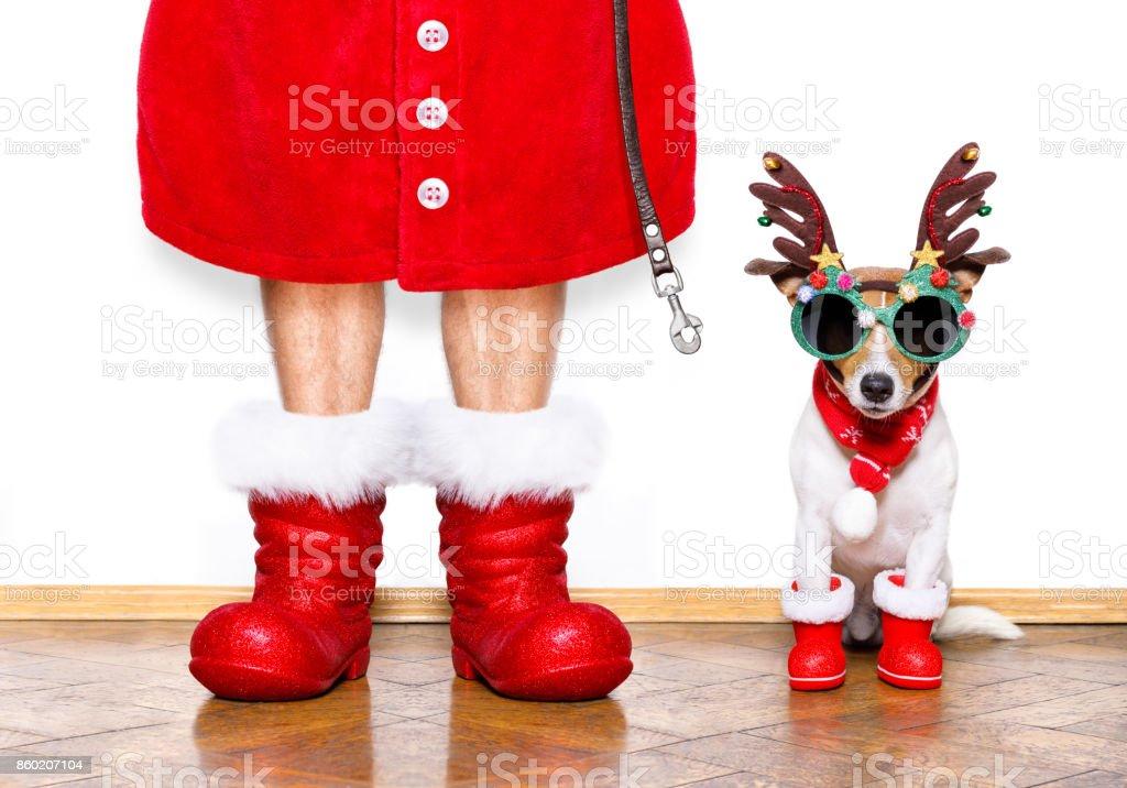 cão de Natal Papai Noel foto de stock royalty-free