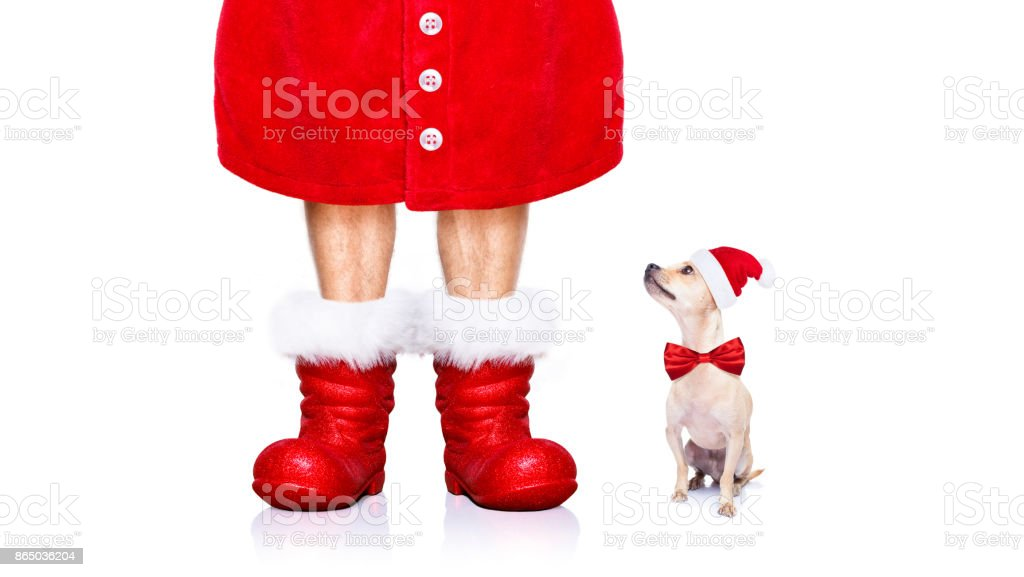 christmas santa claus dog stock photo