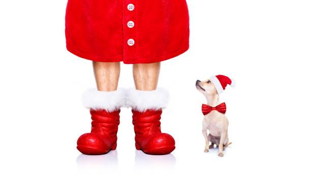 weihnachten weihnachtsmann hund - coole liebessprüche stock-fotos und bilder