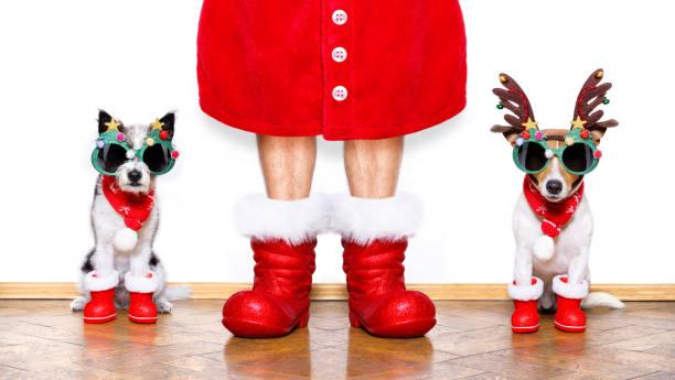 weihnachten weihnachtsmann hunde - coole liebessprüche stock-fotos und bilder