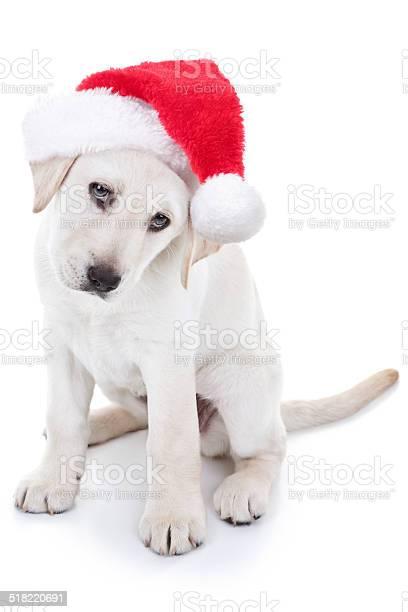 Christmas santa dog picture id518220691?b=1&k=6&m=518220691&s=612x612&h=synxkua2c xmnypnkafuxf78ywnrt329c8wgobryz1e=