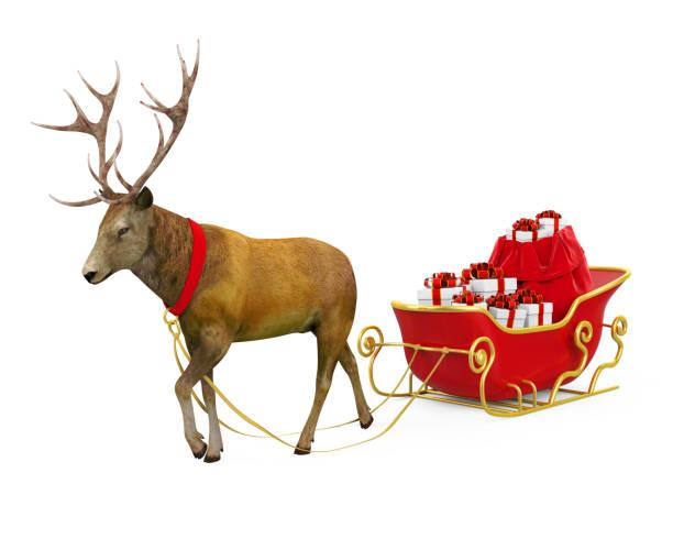 分離されたクリスマスそり - トナカイ ストックフォトと画像