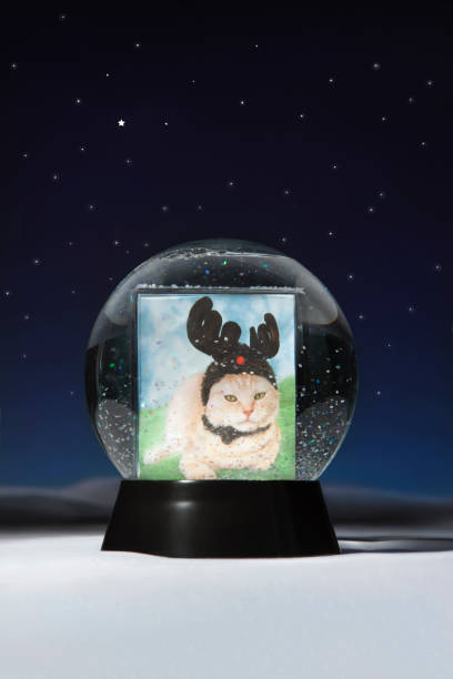 Christmas snow globe with a cats picture inside picture id1082447618?b=1&k=6&m=1082447618&s=612x612&w=0&h=q6b0ek bfc9hdzqba xam0rw5mkpz48on nffab6qvq=