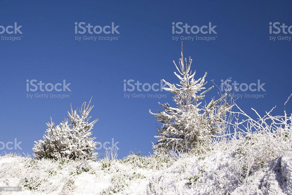 Christmas Snow royalty-free stock photo