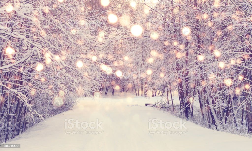 Christmas snowfall in park stock photo