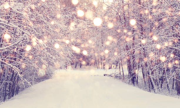christmas snowfall in park - non urban scene stock pictures, royalty-free photos & images