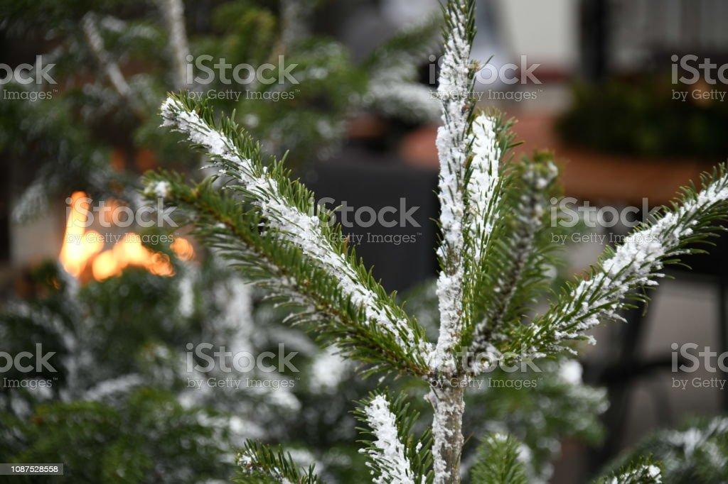 Christmas snowy tree in Denmark stock photo