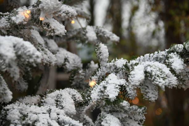 christmas snowy tree in denmark - christmas stock photos and pictures