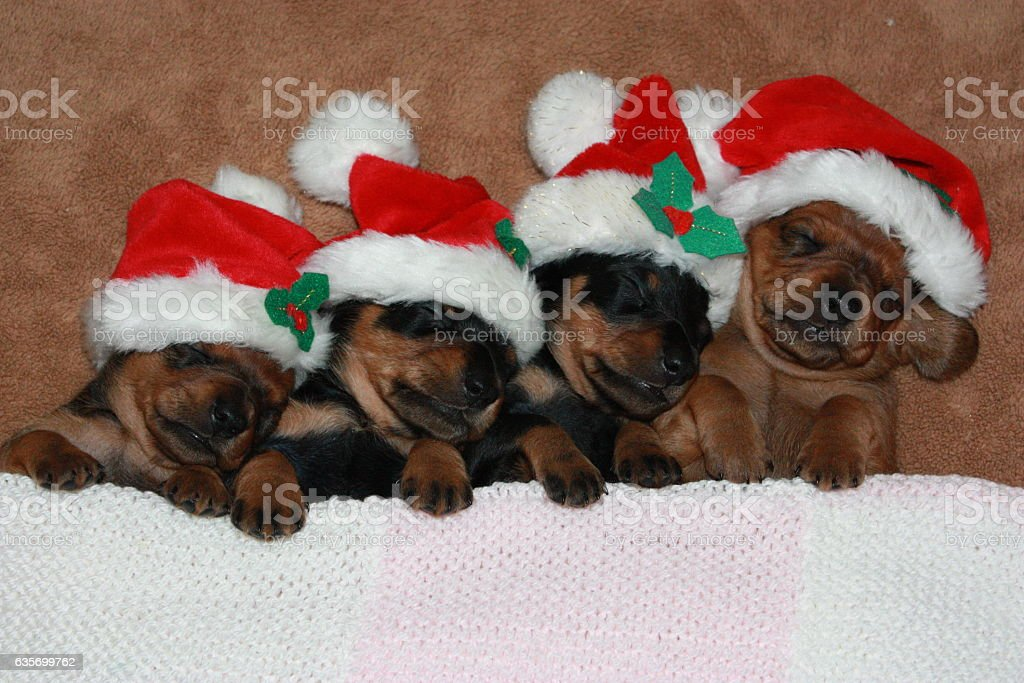 Christmas Spirit royalty-free stock photo