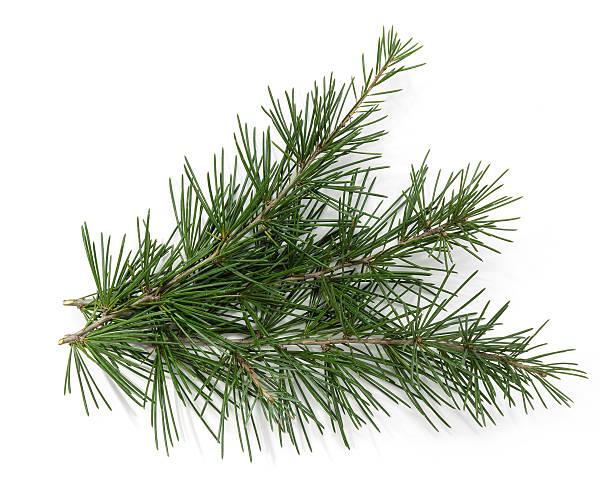 christmas theme hintergrund-frame, pine branch - kiefernzapfen stock-fotos und bilder