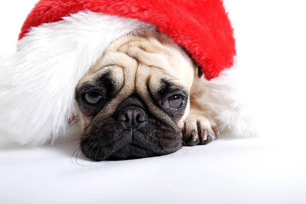 weihnachten müde - blues stock-fotos und bilder