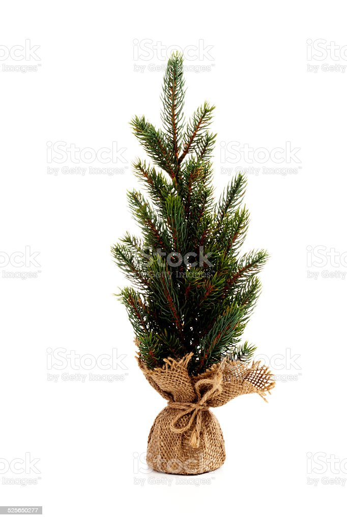 Christmas tree against white background stock photo