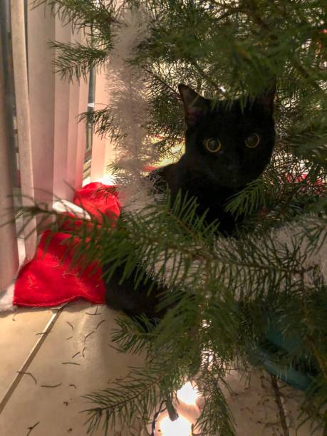 Christmas tree and cat stock photo