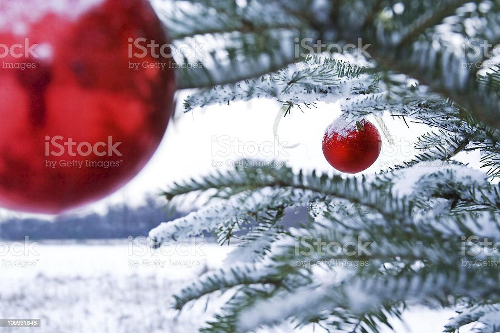 Christmas tree and red bubles royalty-free stock photo