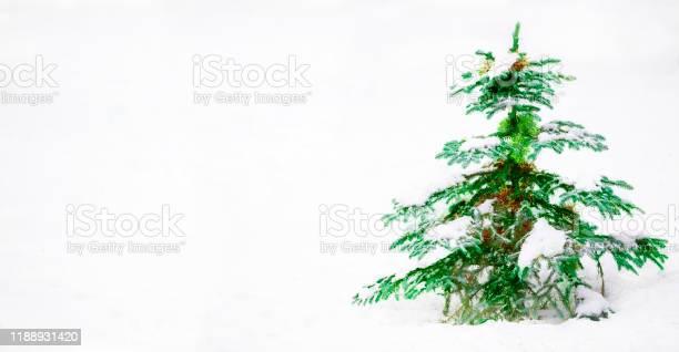 Christmas tree banner on white background picture id1188931420?b=1&k=6&m=1188931420&s=612x612&h=ooddjpr1a0eliks2h7ccihyby r1wd4fujq140p6i6w=