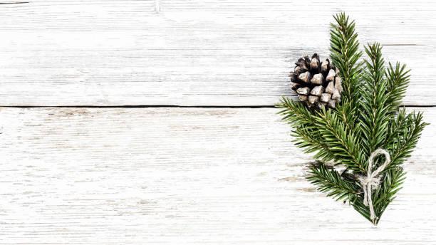 kerstboom tak en dennenappel - pinaceae stockfoto's en -beelden