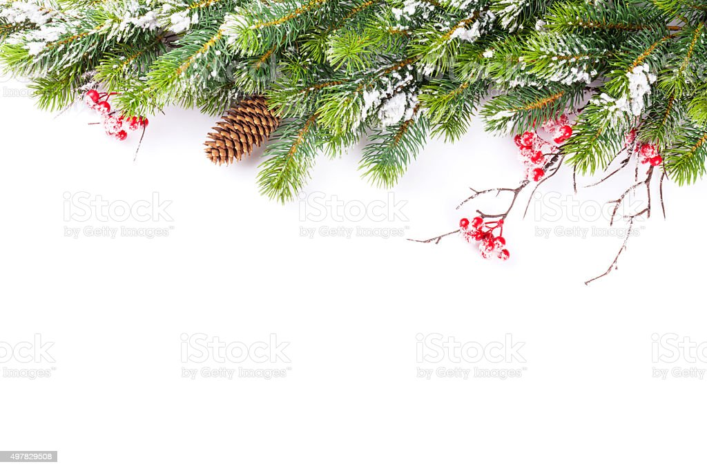 Christmas tree branch with snow stock photo