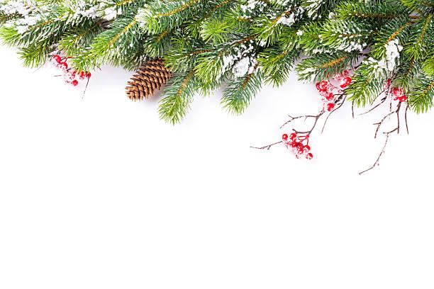 weihnachtsbaum zweig mit schnee - kiefernzapfen stock-fotos und bilder